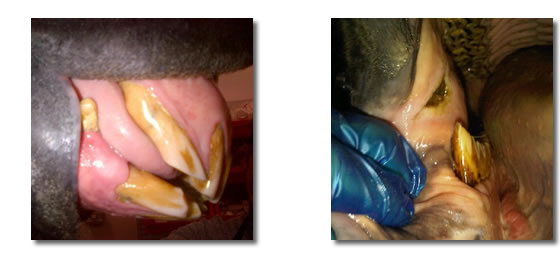 phots of an equine dental examination
